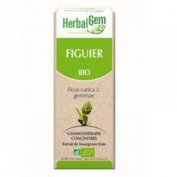 Herbalgem Figuier macérat glycériné 15ml