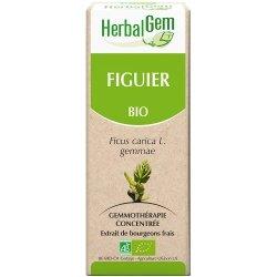 HerbalGem Figuier macerat 50ml